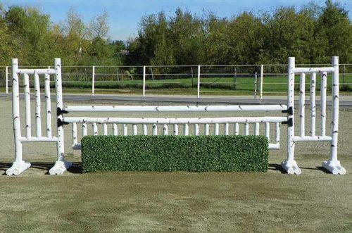 5 foot birch birch jump standards with box hedge