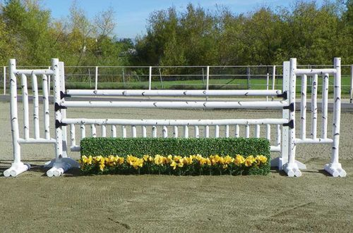 5 foot birch jump standards with box hedge and flower strip