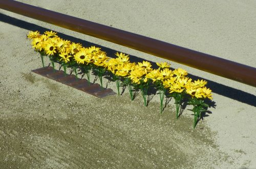 flower strips