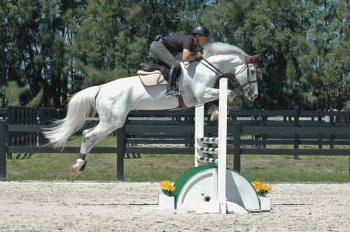 horse jumping over roll top