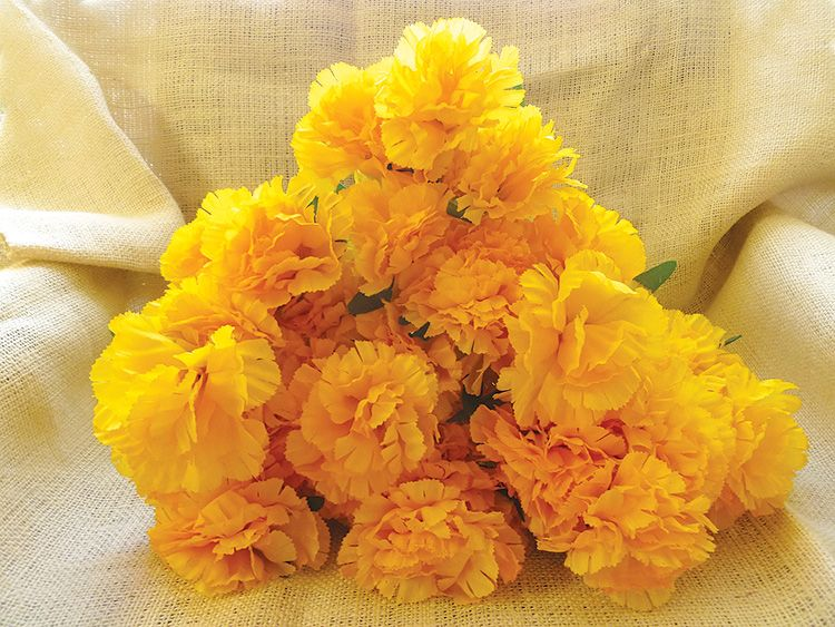 Yellow carnations arena supplies yellow carnations mightylinksfo Gallery