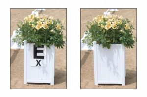 Arena Flower Boxes