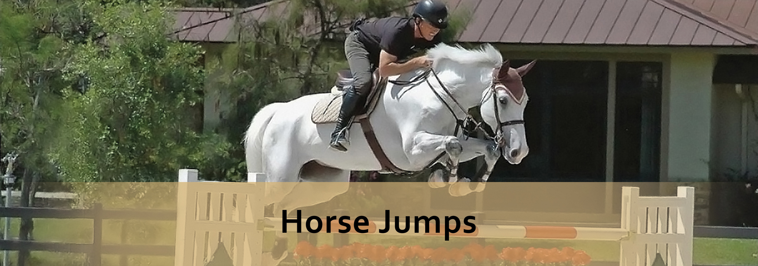 horse jumps landing page