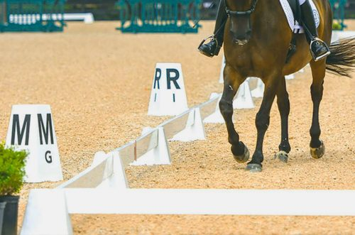 sundance dressage arena with horse